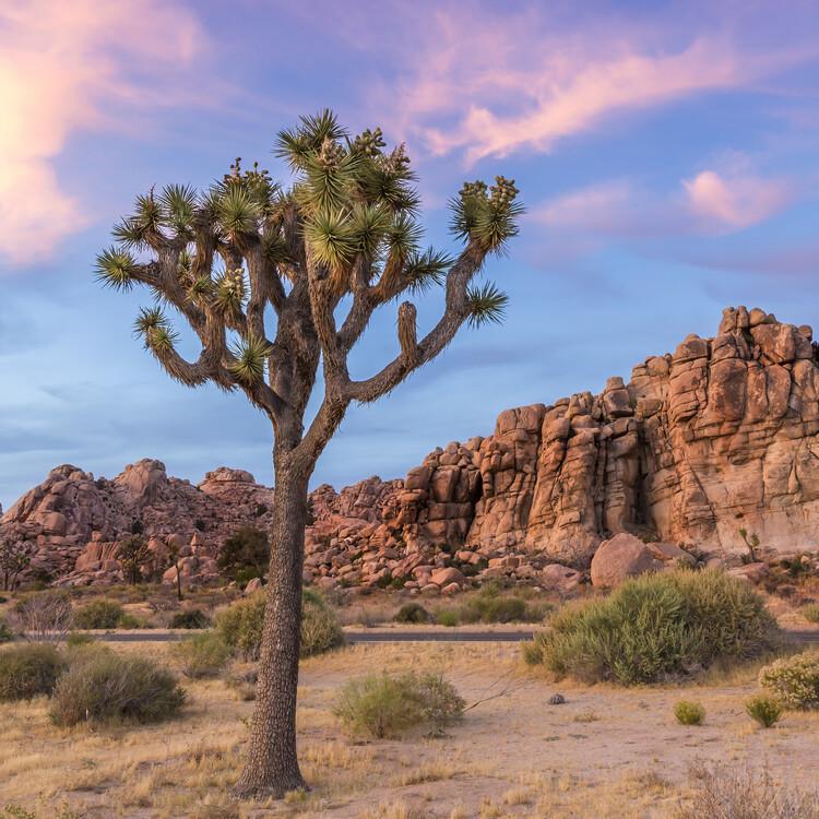 Eksklusiiviset taidevalokuvat Joshua Tree Sunset Mood