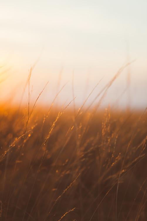 Eksklusiiviset taidevalokuvat Last sunrays over the dry plants
