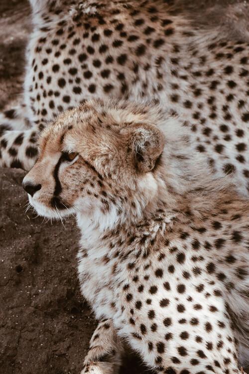 Eksklusiiviset taidevalokuvat Leopard family