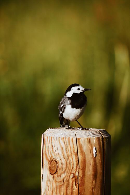 Eksklusiiviset taidevalokuvat Little Bird friend