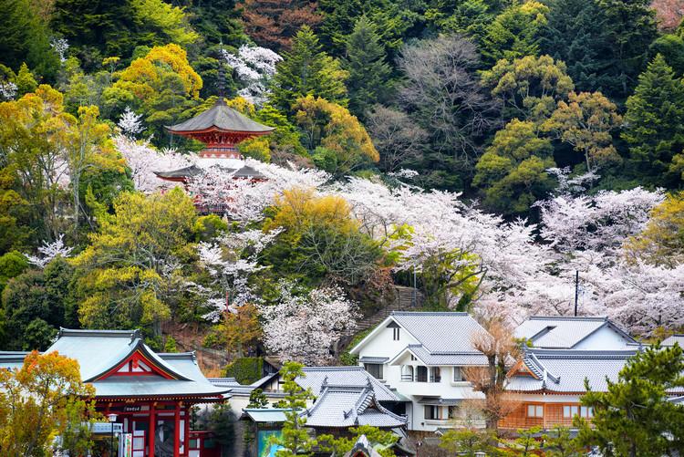 Eksklusiiviset taidevalokuvat Miyajima Pagoda Cherry Blossom