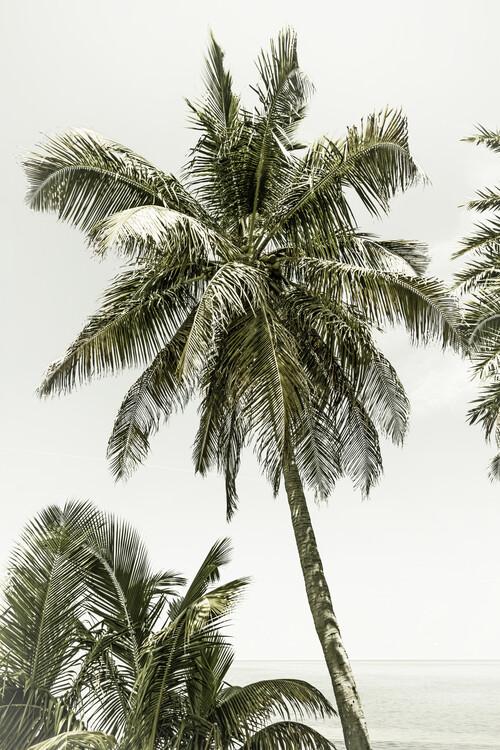 Eksklusiiviset taidevalokuvat Palm Trees at the beach | Vintage