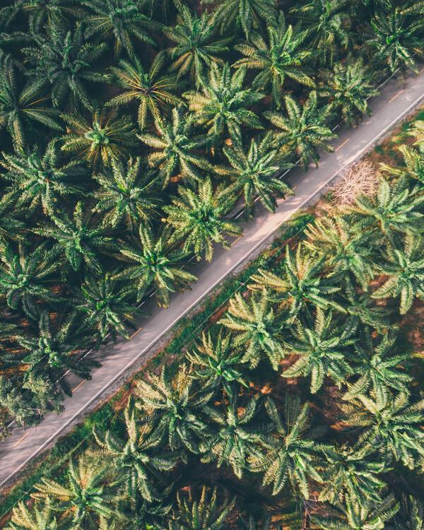 Eksklusiiviset taidevalokuvat Palm-Trees