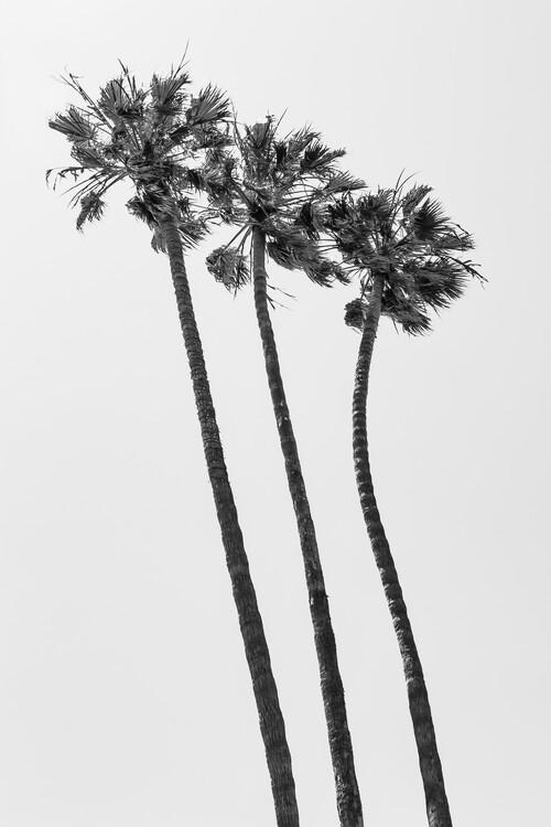 Eksklusiiviset taidevalokuvat Palm Trees Summertime