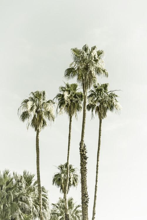 Eksklusiiviset taidevalokuvat Palm Trees Summertime | Vintage