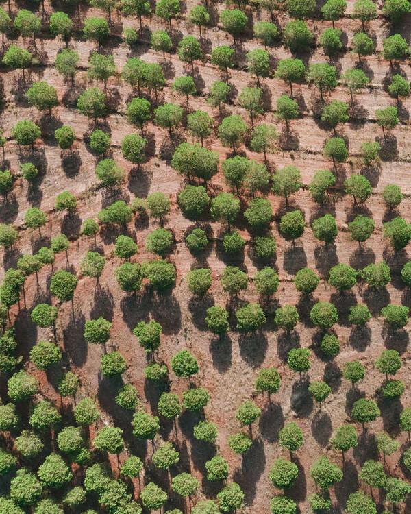 Eksklusiiviset taidevalokuvat Pine Trees