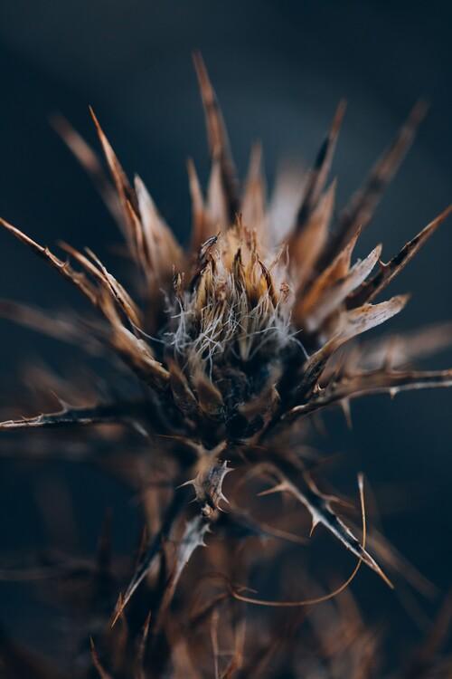 Eksklusiiviset taidevalokuvat Plants and flowers at golden hour 4