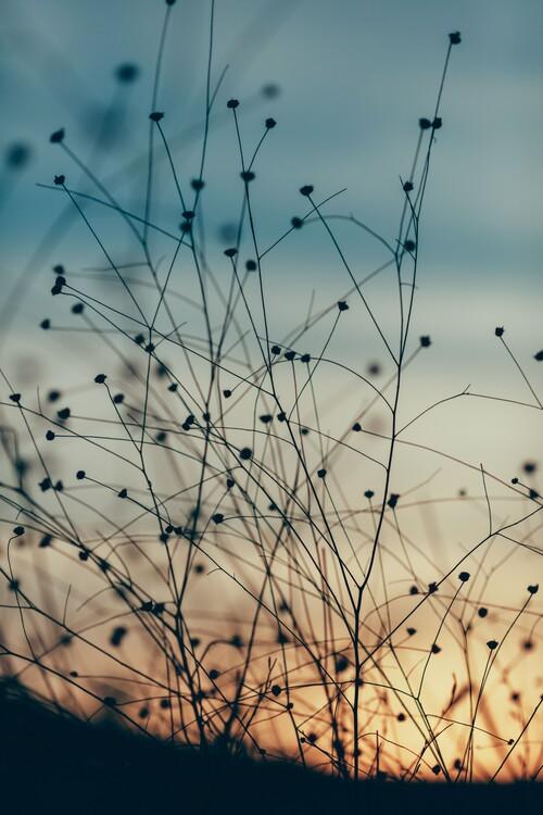 Eksklusiiviset taidevalokuvat Plants and flowers at golden hour