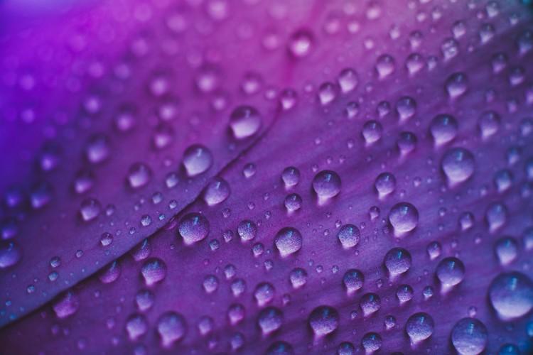 Eksklusiiviset taidevalokuvat Raindrop on a lilac-rose flowers