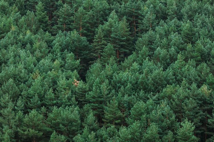 Eksklusiiviset taidevalokuvat Random woods