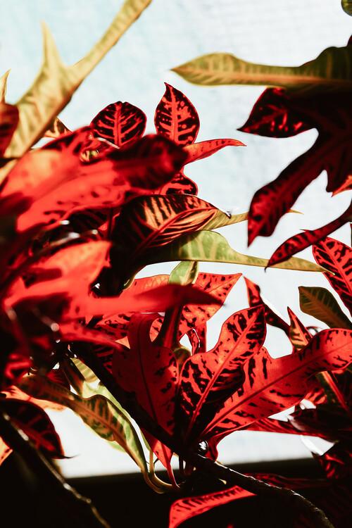 Eksklusiiviset taidevalokuvat Red leaves