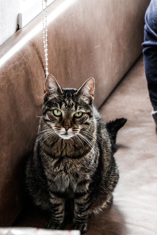Eksklusiiviset taidevalokuvat Stubborn cat