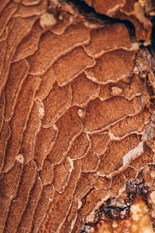 Eksklusiiviset taidevalokuvat Texture from the forest