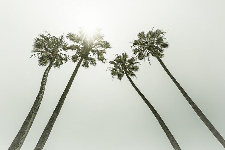 Eksklusiiviset taidevalokuvat Vintage palm trees in the sun