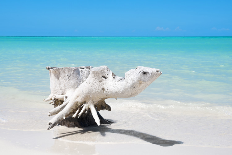 Eksklusiiviset taidevalokuvat Wooden Turtle on the Beach