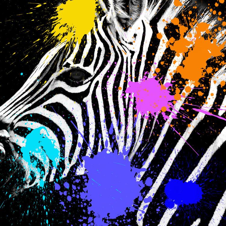 Eksklusiiviset taidevalokuvat Zebra Portrait