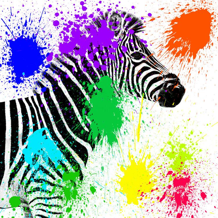 Eksklusiiviset taidevalokuvat Zebra Profile