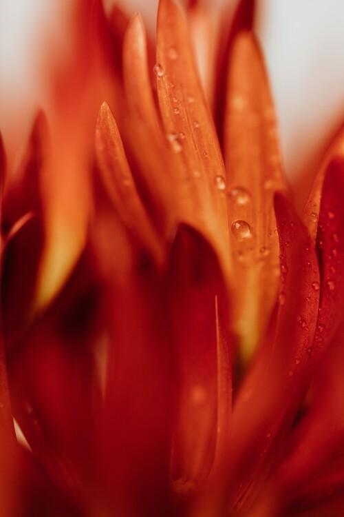 Eksklusiiviset taidevalokuvat Beautiful detail of red flowers