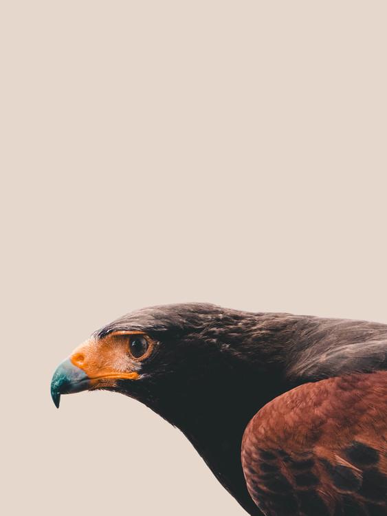 Eksklusiiviset taidevalokuvat Bird of prey