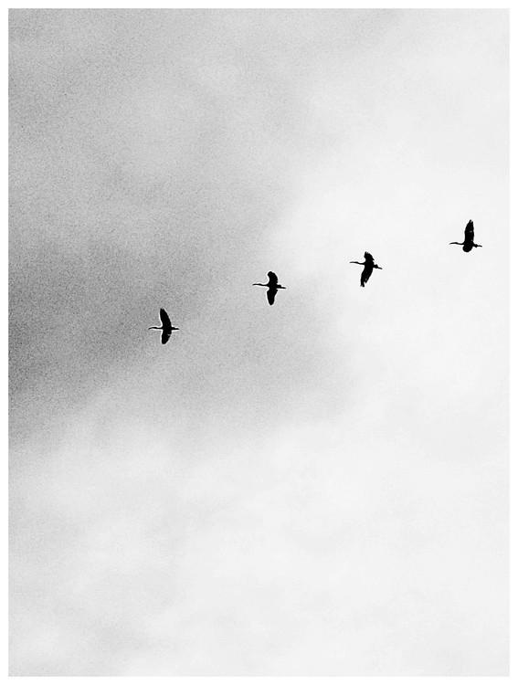 Eksklusiiviset taidevalokuvat Border four birds