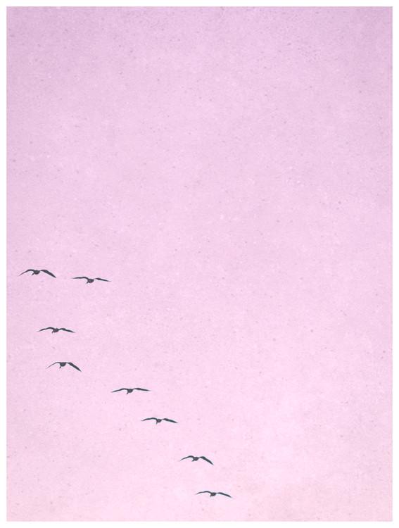 Eksklusiiviset taidevalokuvat borderpinkbirds