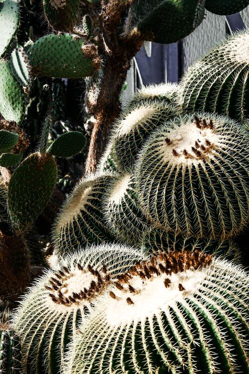 Eksklusiiviset taidevalokuvat Cactus