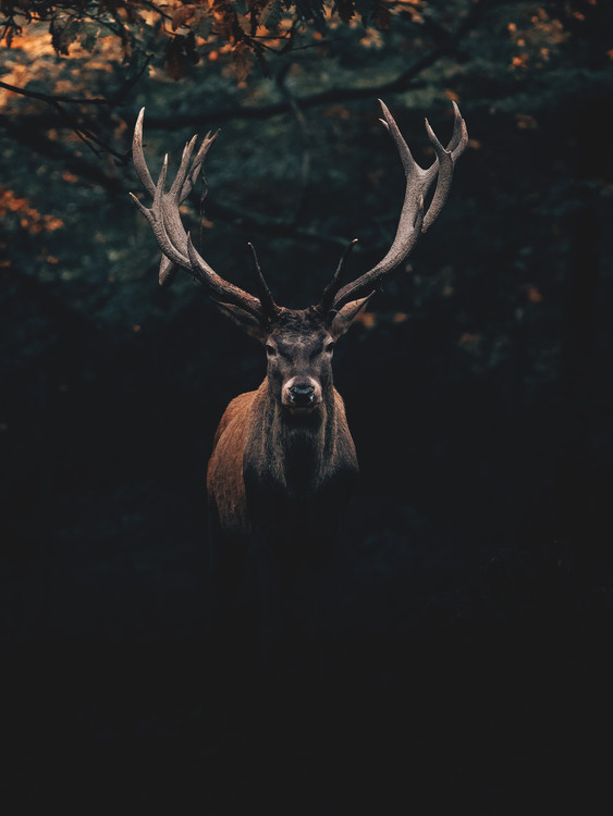 Eksklusiiviset taidevalokuvat Deer1