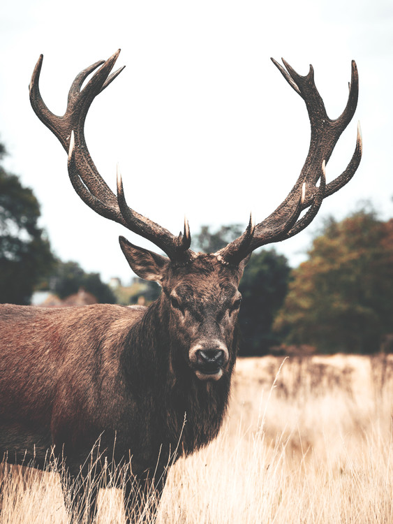 Eksklusiiviset taidevalokuvat Deer2