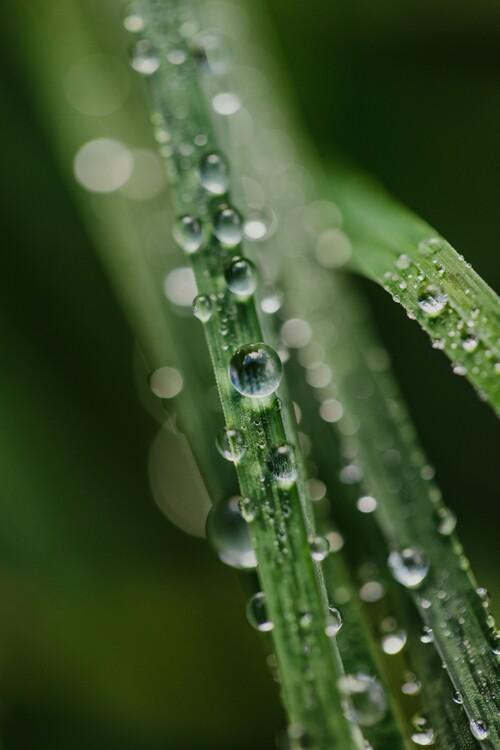 Eksklusiiviset taidevalokuvat Drops on plants