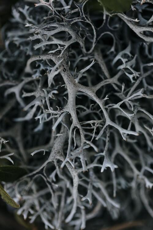 Eksklusiiviset taidevalokuvat Dry plants from the forest