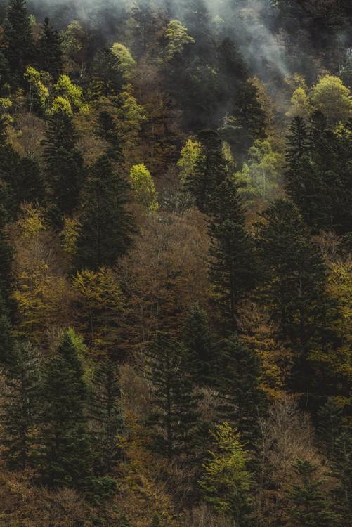 Eksklusiiviset taidevalokuvat Fall trees and fog
