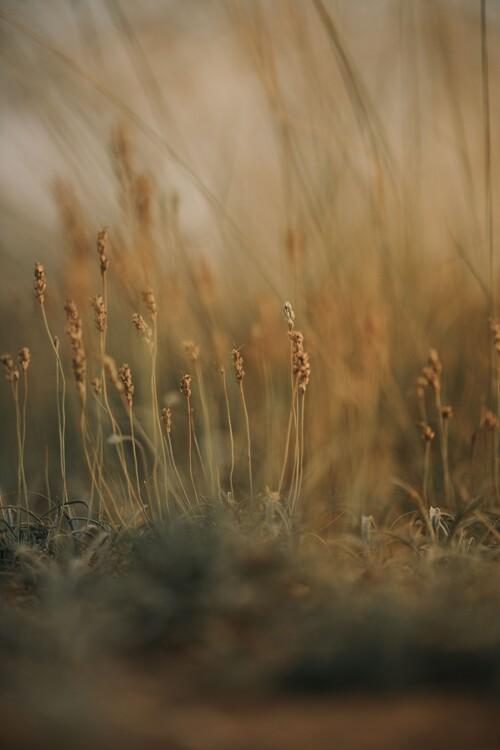 Eksklusiiviset taidevalokuvat Field at golden hour 2