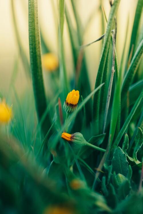 Eksklusiiviset taidevalokuvat Green-flowers-and-plants-from-nature