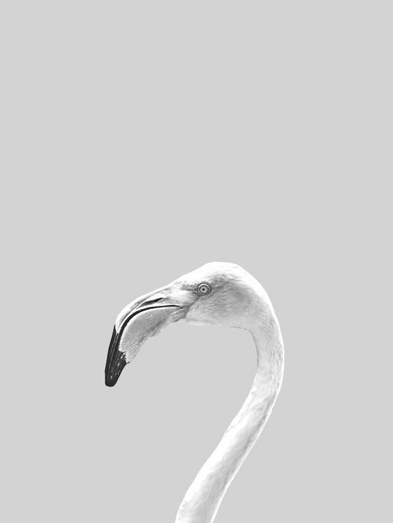 Eksklusiiviset taidevalokuvat Grey bird
