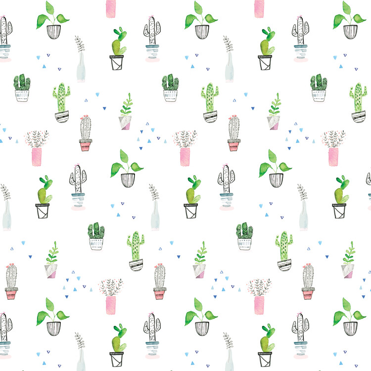 Eksklusiiviset taidevalokuvat Houseplants and cacti