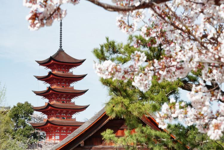 Eksklusiiviset taidevalokuvat Miyajima Pagoda with Sakura