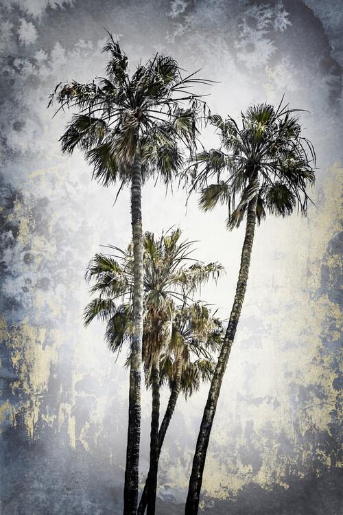Eksklusiiviset taidevalokuvat MODERN ART Lovely Palm Trees