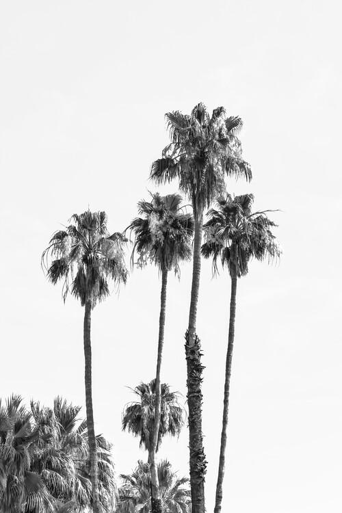 Eksklusiiviset taidevalokuvat Palm trees by the sea