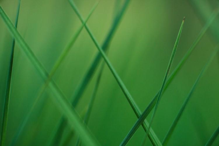 Eksklusiiviset taidevalokuvat Random grass blades