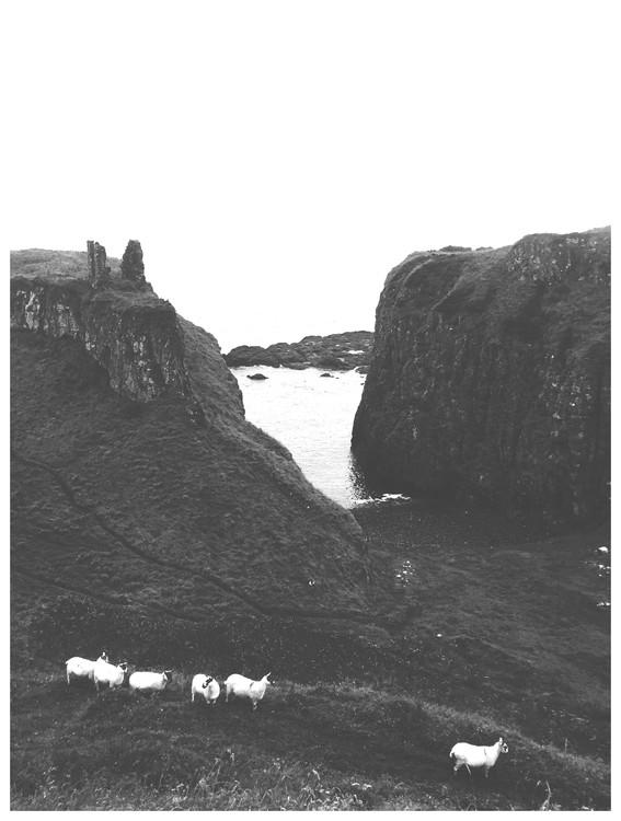 Eksklusiiviset taidevalokuvat sheep hills