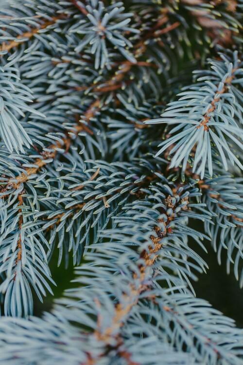 Eksklusiiviset taidevalokuvat Tree branches detail