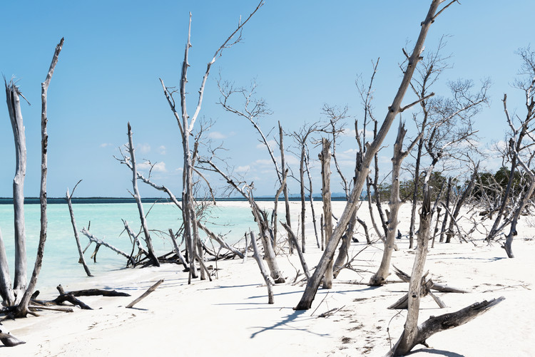 Eksklusiiviset taidevalokuvat Tropical Wild Beach