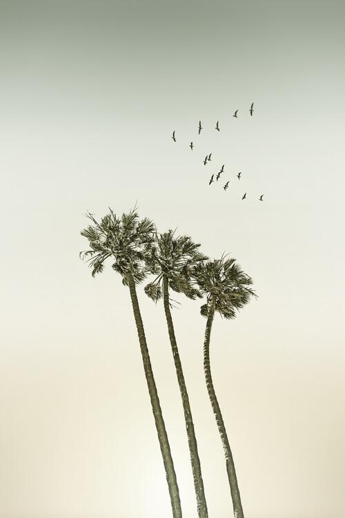 Eksklusiiviset taidevalokuvat Vintage palm trees at sunset