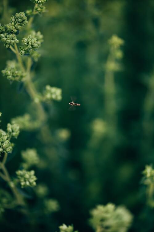 Eksklusiiviset taidevalokuvat Wasp- on the plants