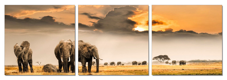 Elephants - Plains of Africa Tableau Multi-Toiles
