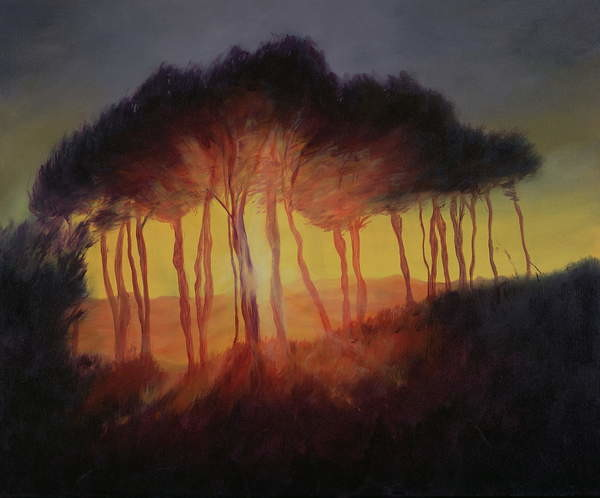 Wild Trees at Sunset, 2002 Canvas Print