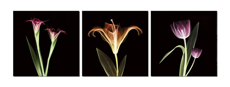Flowers - X-Ray Tableau Multi-Toiles