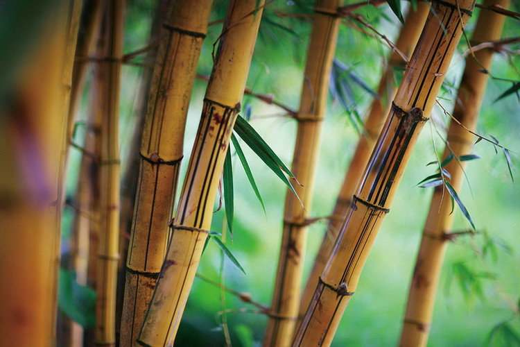 Glass Art Bamboo - Fresh Nature