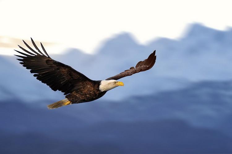 Glass Art Flying Eagle