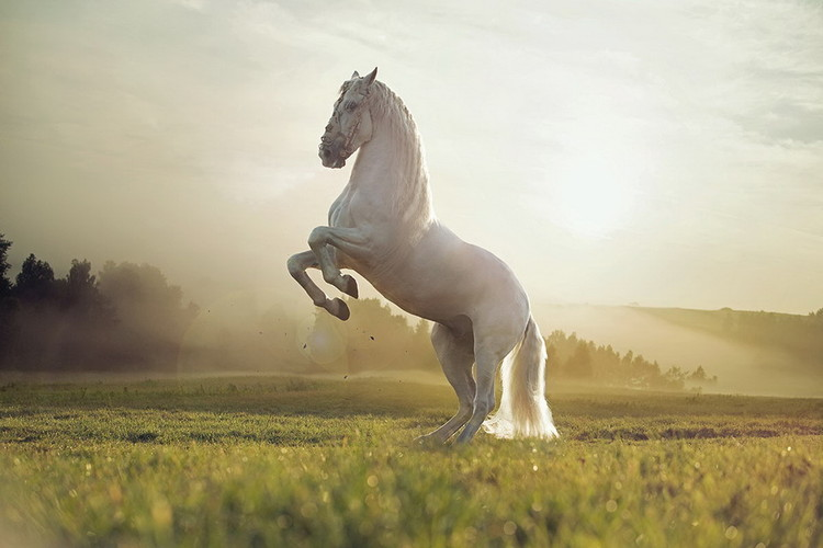 Glass Art Horse - White Proud Horse